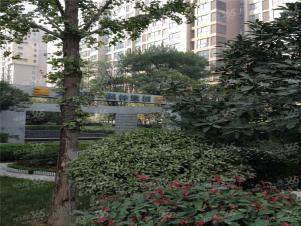 枫林意树,西安枫林意树二手房租房